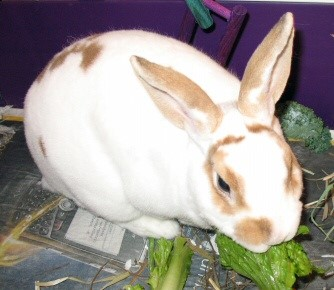 Brandy munching on her greens !